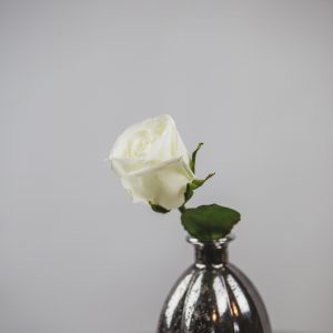 White Rose in Small Silver Vase